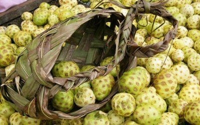 Elements of noni: the noni fruit