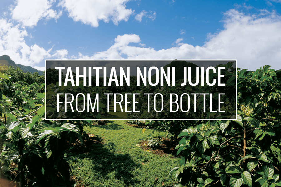 from tree to bottle
